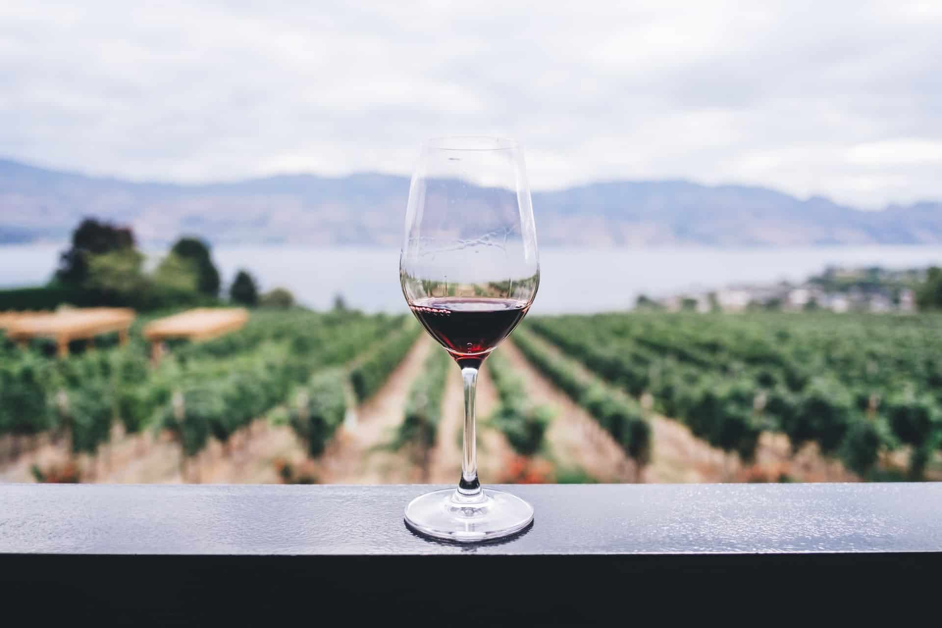 Clear wine glass overlooking orchard during daytime